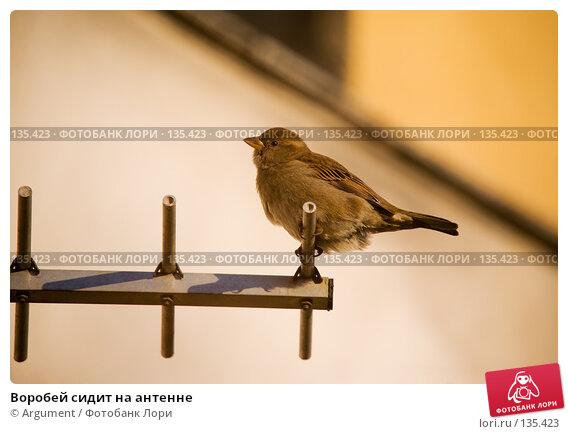 Воробей сидит на антенне, фото № 135423, снято 30 ноября 2007 г. (c) Argument / Фотобанк Лори