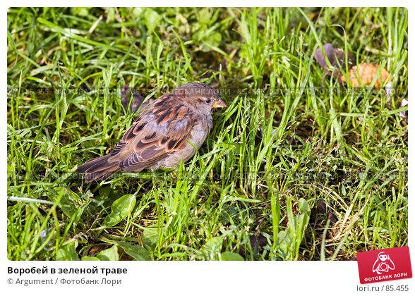 Купить «Воробей в зеленой траве», фото № 85455, снято 17 сентября 2007 г. (c) Argument / Фотобанк Лори