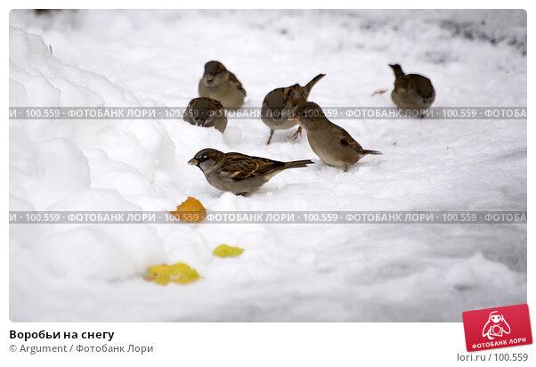 Воробьи на снегу, фото № 100559, снято 3 ноября 2006 г. (c) Argument / Фотобанк Лори