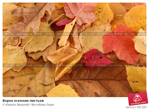 Ворох осенних листьев, фото № 181531, снято 18 октября 2006 г. (c) Коваль Василий / Фотобанк Лори