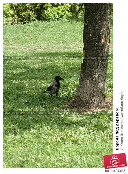 Купить «Ворона под деревом», фото № 3663, снято 16 мая 2006 г. (c) Юлия Яковлева / Фотобанк Лори