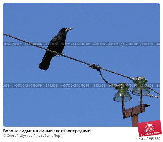 Ворона сидит на линии электропередачи, эксклюзивное фото № 295839, снято 20 апреля 2008 г. (c) Сергей Шустов / Фотобанк Лори