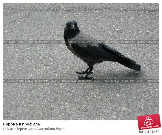 Ворона в профиль, фото № 4459, снято 21 мая 2006 г. (c) Агата Терентьева / Фотобанк Лори