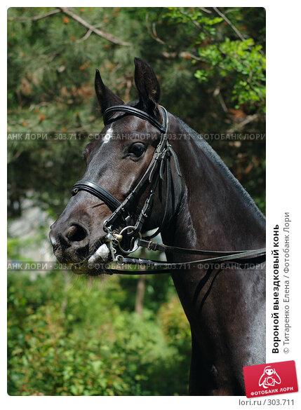 Вороной выездковый конь, фото № 303711, снято 29 мая 2008 г. (c) Титаренко Елена / Фотобанк Лори