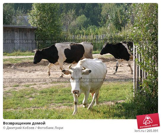 Возвращение домой, фото № 265091, снято 13 августа 2005 г. (c) Дмитрий Кобзев / Фотобанк Лори