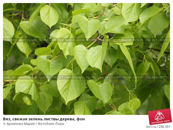 Вяз, свежая зелень листвы дерева, фон, фото № 298351, снято 25 мая 2008 г. (c) Архипова Мария / Фотобанк Лори