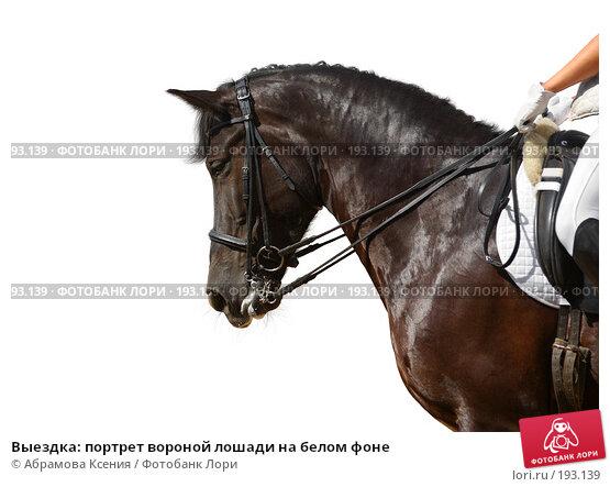 Купить «Выездка: портрет вороной лошади на белом фоне», фото № 193139, снято 12 августа 2006 г. (c) Абрамова Ксения / Фотобанк Лори