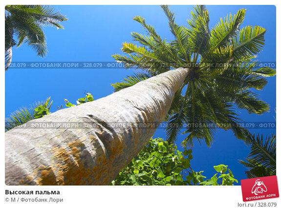 Высокая пальма, фото № 328079, снято 24 января 2017 г. (c) Михаил / Фотобанк Лори