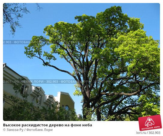 Высокое раскидистое дерево на фоне неба, фото № 302903, снято 24 мая 2008 г. (c) Заноза-Ру / Фотобанк Лори