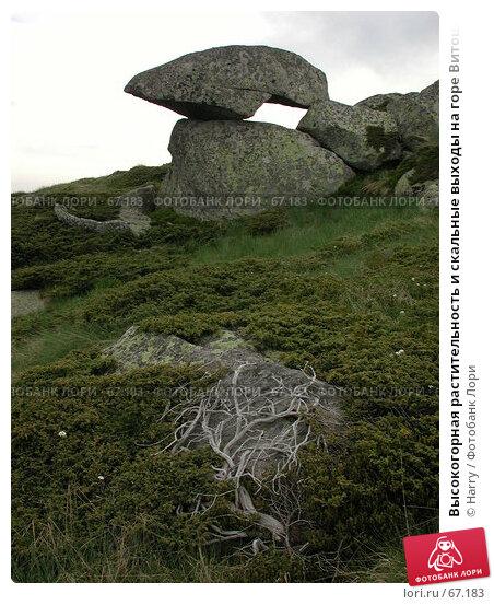 Купить «Высокогорная растительность и скальные выходы на горе Витоша», фото № 67183, снято 26 июня 2004 г. (c) Harry / Фотобанк Лори