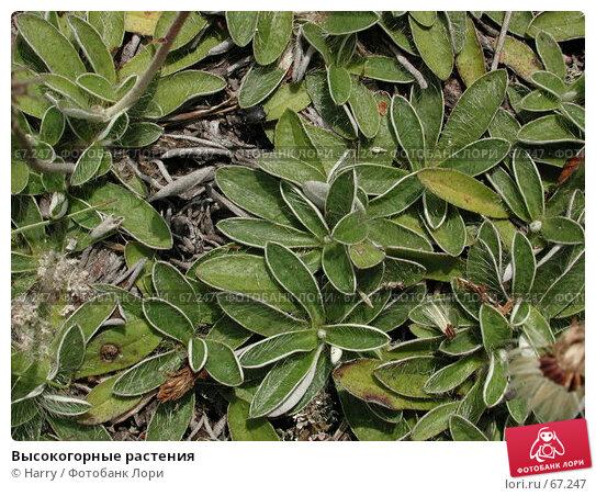 Высокогорные растения, фото № 67247, снято 5 сентября 2004 г. (c) Harry / Фотобанк Лори