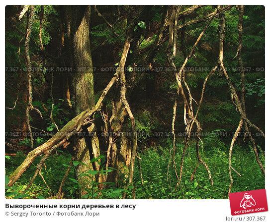 Вывороченные корни деревьев в лесу, фото № 307367, снято 28 июля 2004 г. (c) Sergey Toronto / Фотобанк Лори