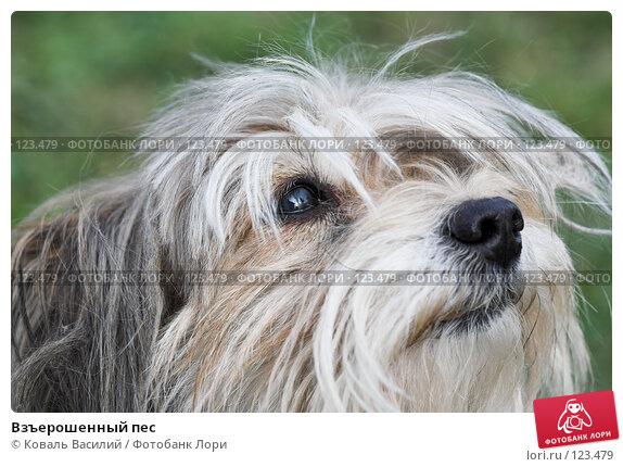 Взъерошенный пес, фото № 123479, снято 17 сентября 2006 г. (c) Коваль Василий / Фотобанк Лори