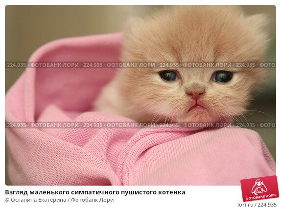 Взгляд маленького симпатичного пушистого котенка, фото № 224935, снято 4 марта 2008 г. (c) Останина Екатерина / Фотобанк Лори