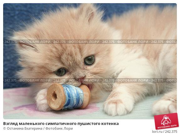 Взгляд маленького симпатичного пушистого котенка, фото № 242375, снято 28 марта 2008 г. (c) Останина Екатерина / Фотобанк Лори