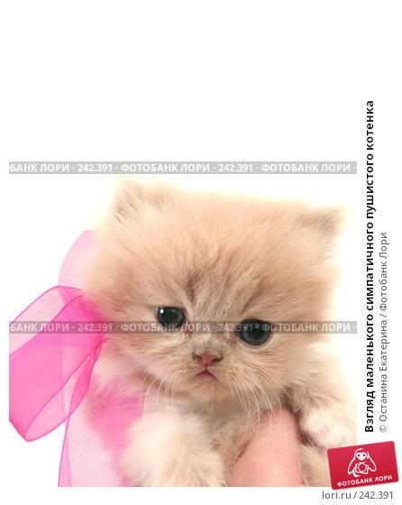 Взгляд маленького симпатичного пушистого котенка, фото № 242391, снято 17 марта 2008 г. (c) Останина Екатерина / Фотобанк Лори
