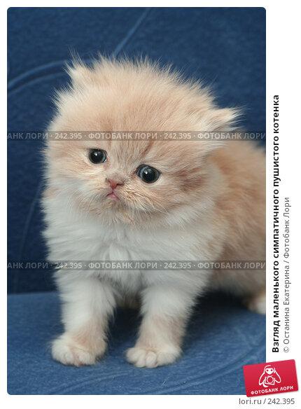 Взгляд маленького симпатичного пушистого котенка, фото № 242395, снято 18 марта 2008 г. (c) Останина Екатерина / Фотобанк Лори