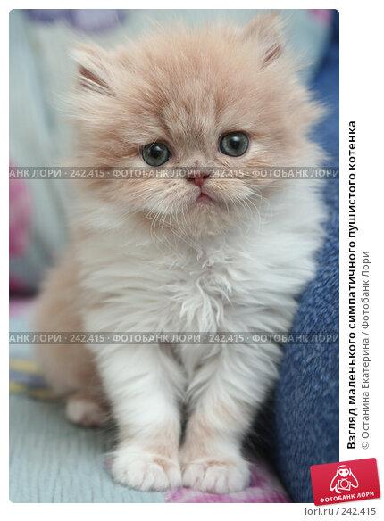 Взгляд маленького симпатичного пушистого котенка, фото № 242415, снято 28 марта 2008 г. (c) Останина Екатерина / Фотобанк Лори