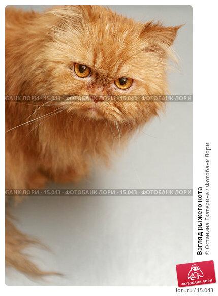 Взгляд рыжего кота , фото № 15043, снято 1 ноября 2006 г. (c) Останина Екатерина / Фотобанк Лори