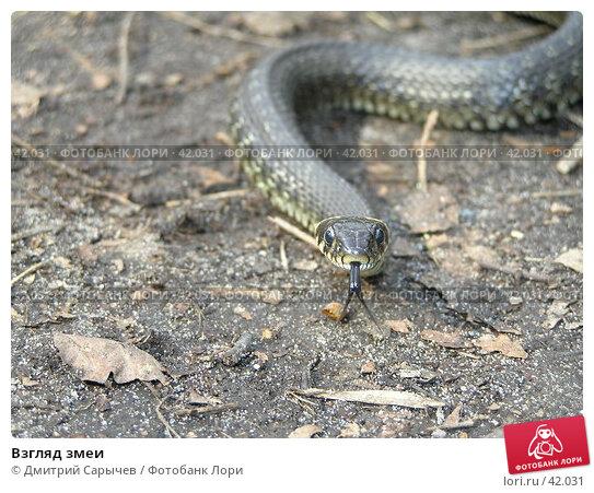 Взгляд змеи, фото № 42031, снято 1 мая 2005 г. (c) Дмитрий Сарычев / Фотобанк Лори