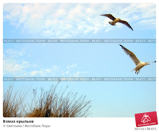 Купить «Взмах крыльев», фото № 94611, снято 30 августа 2007 г. (c) Светлана / Фотобанк Лори
