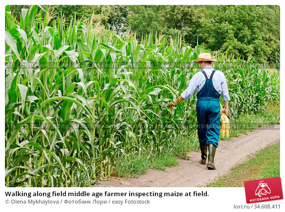 Walking along field middle age farmer inspecting maize at field. Стоковое фото, фотограф Olena Mykhaylova / easy Fotostock / Фотобанк Лори