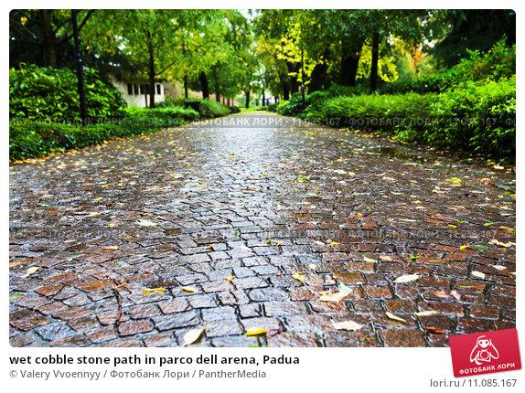 Купить «wet cobble stone path in parco dell arena, Padua», фото № 11085167, снято 16 июня 2019 г. (c) PantherMedia / Фотобанк Лори