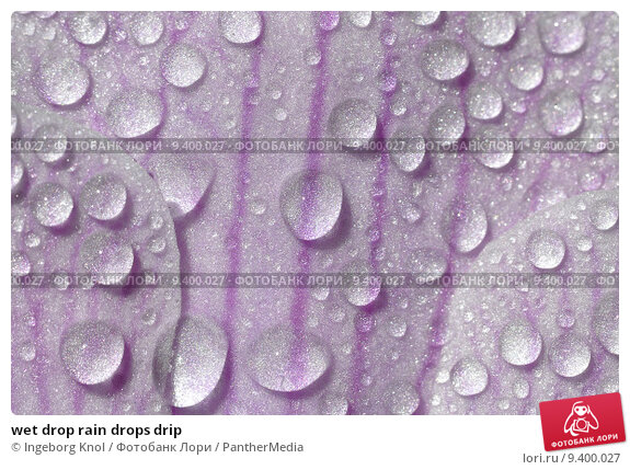 dripping wet фото
