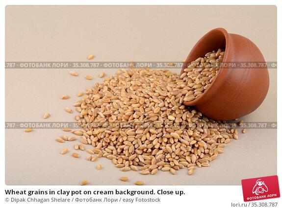 Wheat grains in clay pot on cream background. Close up. Стоковое фото, фотограф Dipak Chhagan Shelare / easy Fotostock / Фотобанк Лори