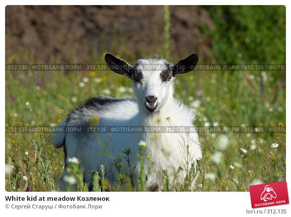 White kid at meadow Козленок, фото № 312135, снято 4 июня 2008 г. (c) Сергей Старуш / Фотобанк Лори