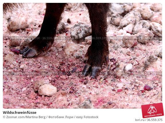 Wildschweinfüsse. Стоковое фото, фотограф Zoonar.com/Martina Berg / easy Fotostock / Фотобанк Лори
