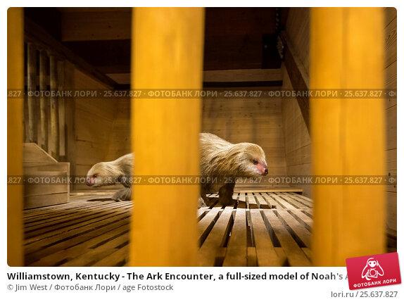 Купить «Williamstown, Kentucky - The Ark Encounter, a full-sized model of Noah's Ark built by the fundamentalist Christian group, Answers in Genesis. Displays...», фото № 25637827, снято 18 января 2017 г. (c) age Fotostock / Фотобанк Лори