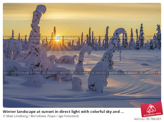Winter landscape at sunset in direct light with colorful sky and ... Стоковое фото, фотограф Mats Lindberg / age Fotostock / Фотобанк Лори