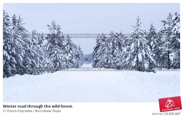 Купить «Winter road through the wild forest.», фото № 29839867, снято 4 января 2016 г. (c) Ольга Сергеева / Фотобанк Лори