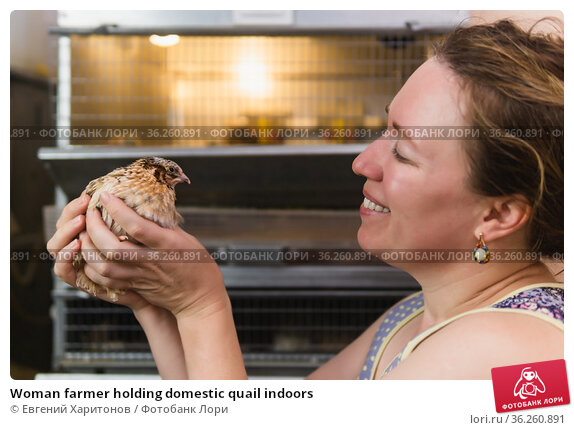 Woman farmer holding domestic quail indoors. Стоковое фото, фотограф Евгений Харитонов / Фотобанк Лори