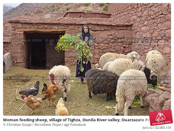 Woman feeding sheep, village of Tighza, Ounila River valley, Ouarzazate Province, region of Draa-Tafilalet, Morocco, North West Africa. (2019 год). Редакционное фото, фотограф Christian Goupi / age Fotostock / Фотобанк Лори