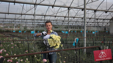 Купить «Woman gardener is standing with flowers carnation in orangery», видеоролик № 32464815, снято 14 августа 2019 г. (c) Яков Филимонов / Фотобанк Лори