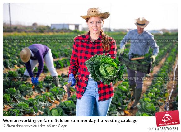 Woman working on farm field on summer day, harvesting cabbage. Стоковое фото, фотограф Яков Филимонов / Фотобанк Лори