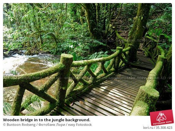 Wooden bridge in to the jungle background. Стоковое фото, фотограф Buntoon Rodseng / easy Fotostock / Фотобанк Лори