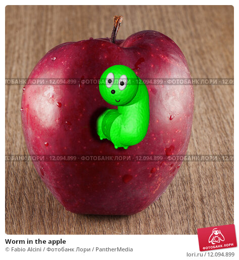 the worms in the apple There are several types of fruitworms, which are pests of fruit trees and the damage they cause can be great to help with this, you can read here for fruitworm control information.