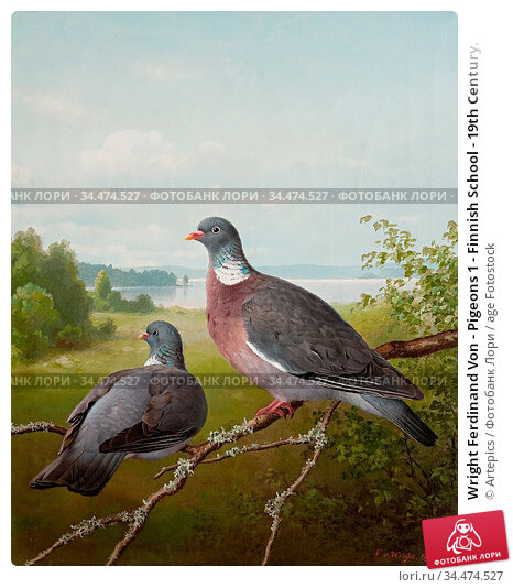 Wright Ferdinand Von - Pigeons 1 - Finnish School - 19th Century. Редакционное фото, фотограф Artepics / age Fotostock / Фотобанк Лори