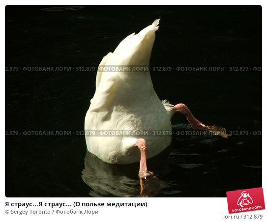 Я страус...Я страус... (О пользе медитации), фото № 312879, снято 29 июля 2004 г. (c) Sergey Toronto / Фотобанк Лори