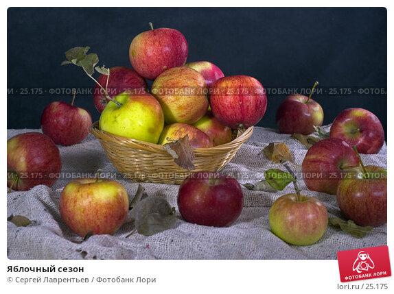 Купить «Яблочный сезон», фото № 25175, снято 18 июля 2018 г. (c) Сергей Лаврентьев / Фотобанк Лори