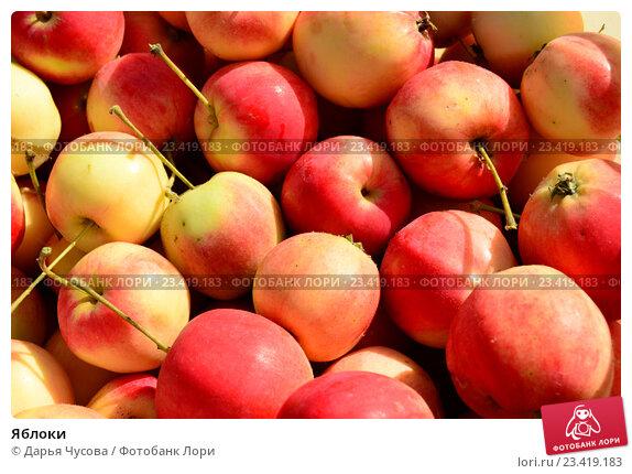 Яблоки. Стоковое фото, фотограф Дарья Чусова / Фотобанк Лори