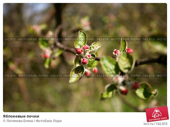 Яблоневые почки, фото № 142815, снято 7 мая 2007 г. (c) Логинова Елена / Фотобанк Лори