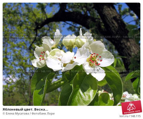 Купить «Яблоневый цвет. Весна...», фото № 148115, снято 8 мая 2004 г. (c) Елена Мусатова / Фотобанк Лори