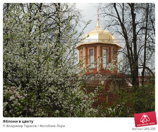 Яблони в цвету, фото № 293235, снято 2 мая 2008 г. (c) Владимир Тарасов / Фотобанк Лори