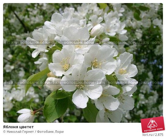 Яблоня цветет, фото № 2875, снято 14 июня 2004 г. (c) Николай Гернет / Фотобанк Лори
