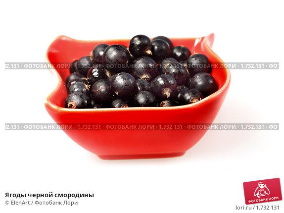 Купить «Ягоды черной смородины», фото № 1732131, снято 15 июля 2009 г. (c) ElenArt / Фотобанк Лори