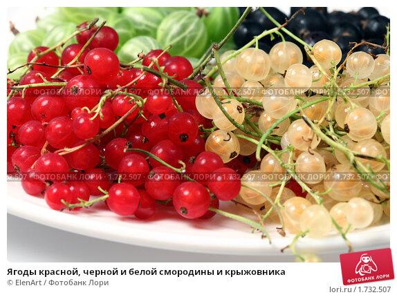 Купить «Ягоды красной, черной и белой смородины и крыжовника», фото № 1732507, снято 16 июля 2009 г. (c) ElenArt / Фотобанк Лори